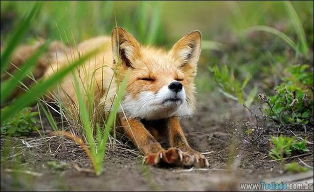 animais-que-faz-yoga-24