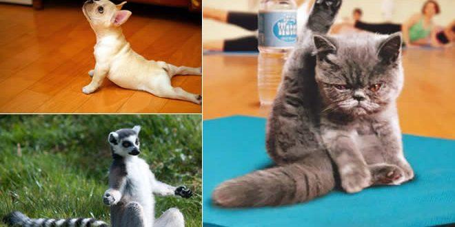 animais-yoga