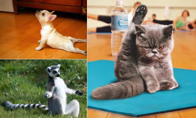 25 animais que faz Yoga melhor do que você 2