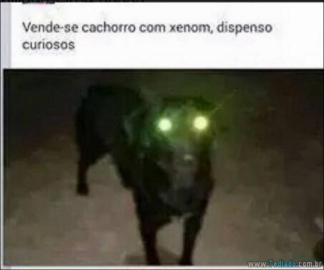 brasileiros-zueira-remedio-rir-15