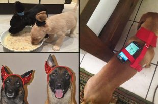 cachorro-cao-ideias-malucas
