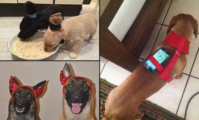 19 proprietários de cachorros e suas ideias malucas 2