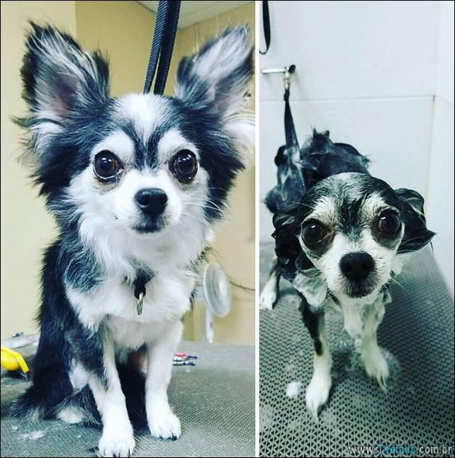 cachorros-antes-e-depois-do-banho-01