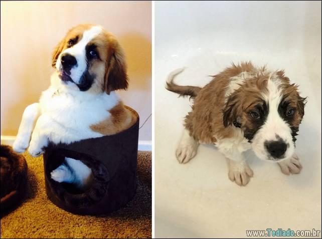 cachorros-antes-e-depois-do-banho-02