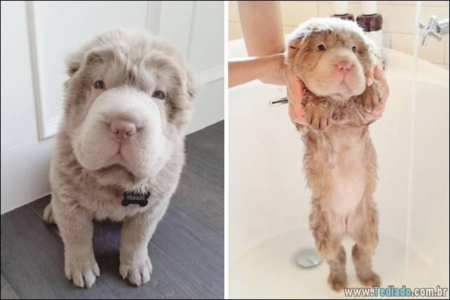 cachorros-antes-e-depois-do-banho-03