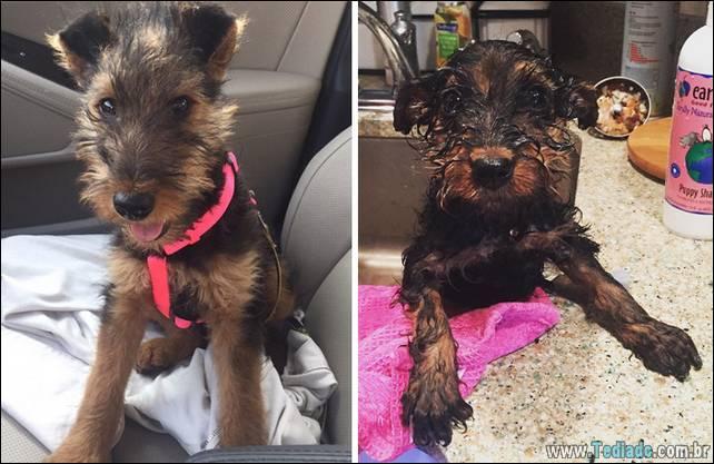cachorros-antes-e-depois-do-banho-04