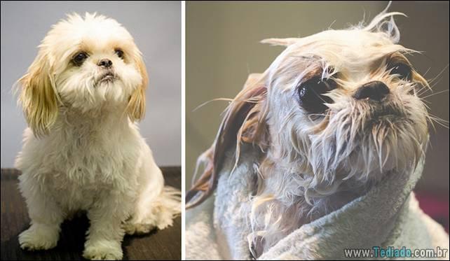 cachorros-antes-e-depois-do-banho-06