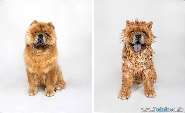 cachorros-antes-e-depois-do-banho-07