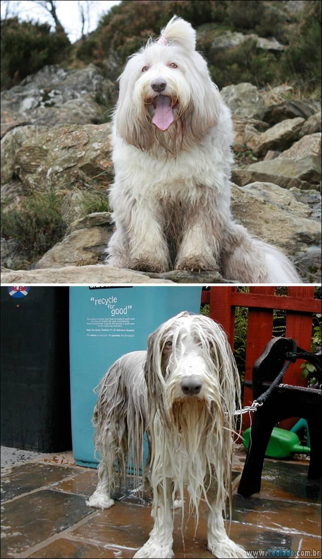 cachorros-antes-e-depois-do-banho-09