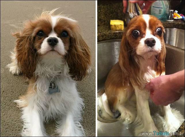 cachorros-antes-e-depois-do-banho-10