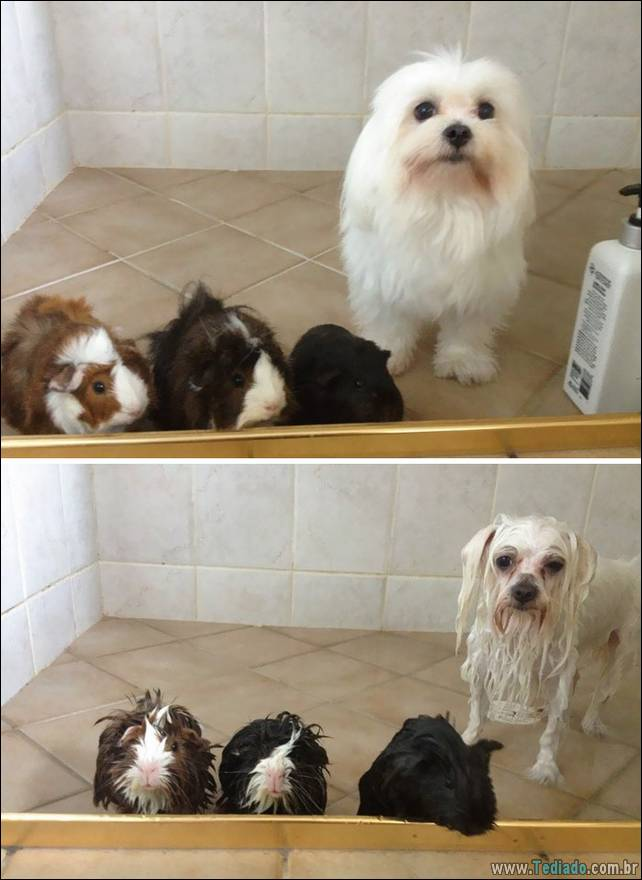 cachorros-antes-e-depois-do-banho-15