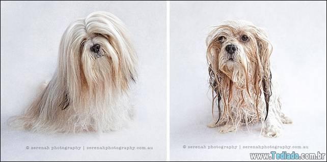 cachorros-antes-e-depois-do-banho-16