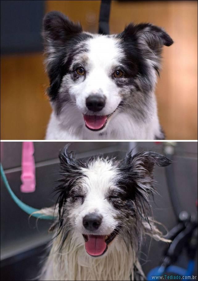 cachorros-antes-e-depois-do-banho-17