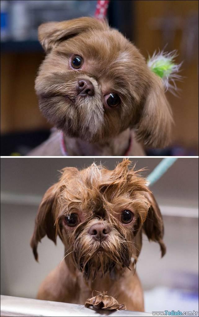 cachorros-antes-e-depois-do-banho-20