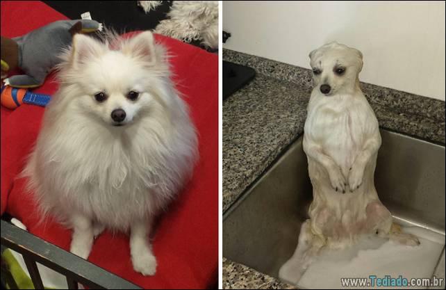 cachorros-antes-e-depois-do-banho-23