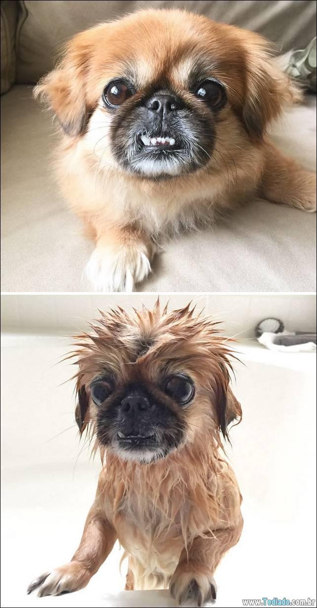 cachorros-antes-e-depois-do-banho-24