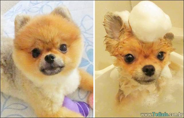 cachorros-antes-e-depois-do-banho-25