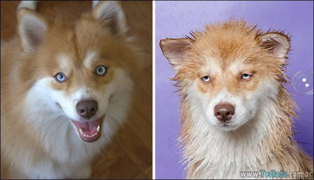 cachorros-antes-e-depois-do-banho-26