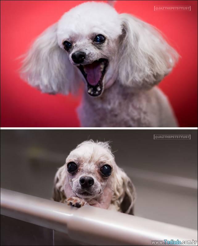 cachorros-antes-e-depois-do-banho-29