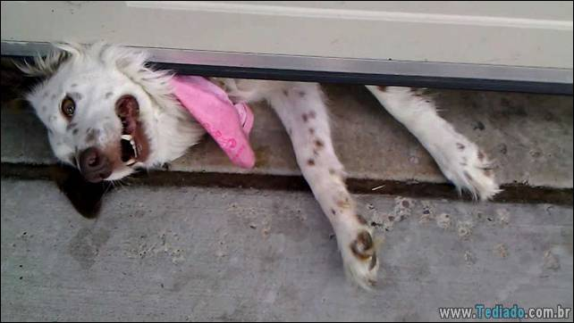 cachorros-desesperado-dizer-oi-10