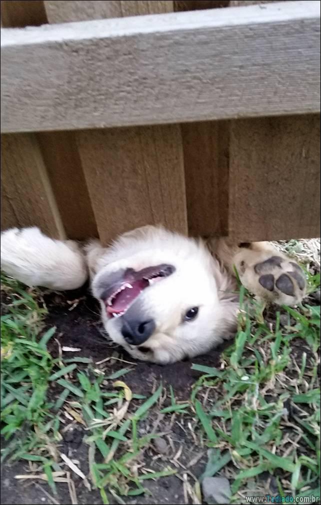 cachorros-desesperado-dizer-oi-11