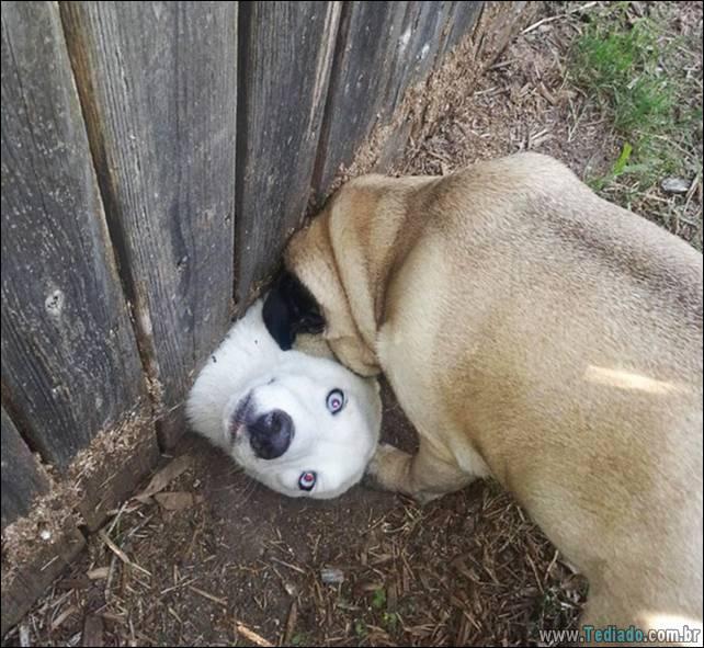 cachorros-desesperado-dizer-oi-12