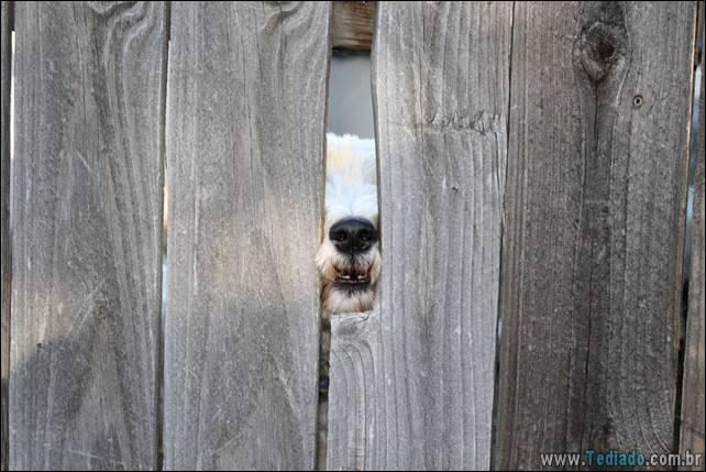 cachorros-desesperado-dizer-oi-13