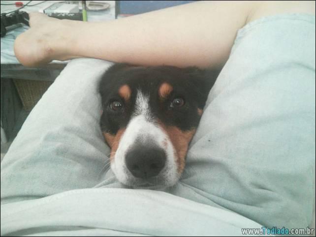 cachorros-desesperado-dizer-oi-14