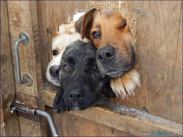 cachorros-desesperado-dizer-oi-15