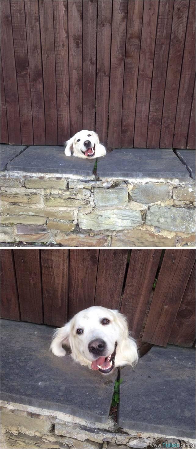 cachorros-desesperado-dizer-oi-17