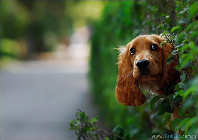 cachorros-desesperado-dizer-oi-18