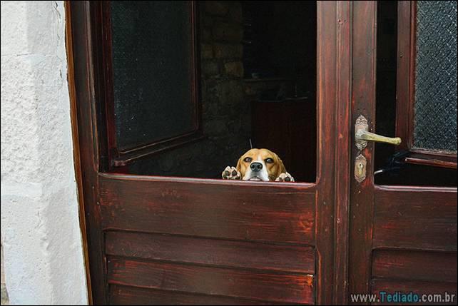 cachorros-desesperado-dizer-oi-21