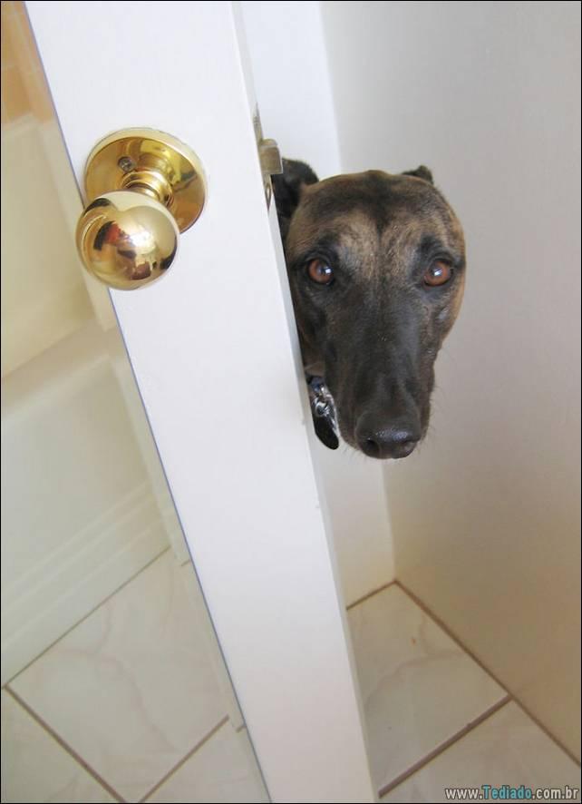 cachorros-desesperado-dizer-oi-22