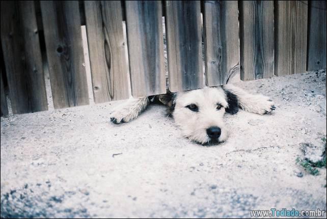 cachorros-desesperado-dizer-oi-23