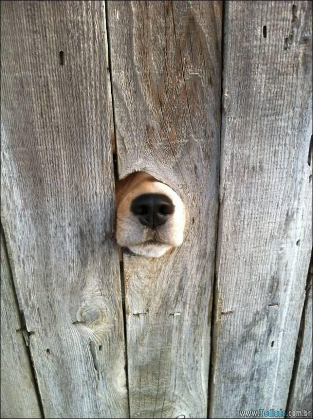 cachorros-desesperado-dizer-oi-25