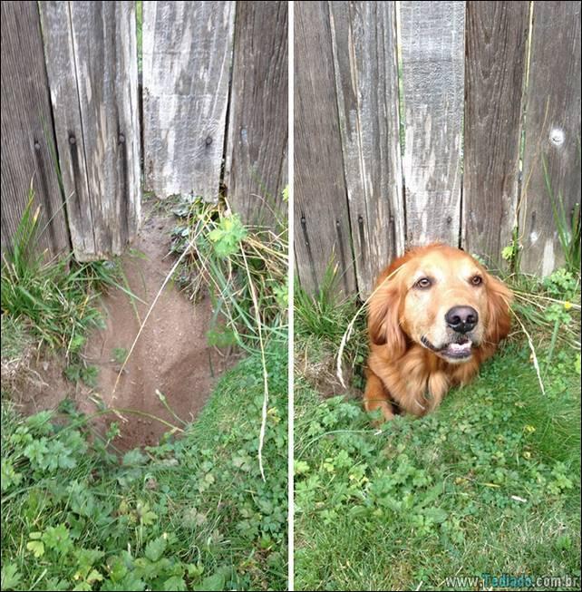 cachorros-desesperado-dizer-oi-26