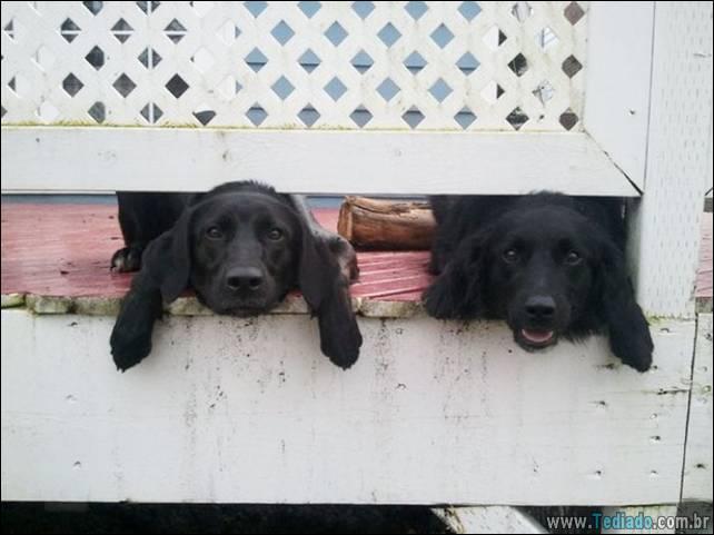 cachorros-desesperado-dizer-oi-27