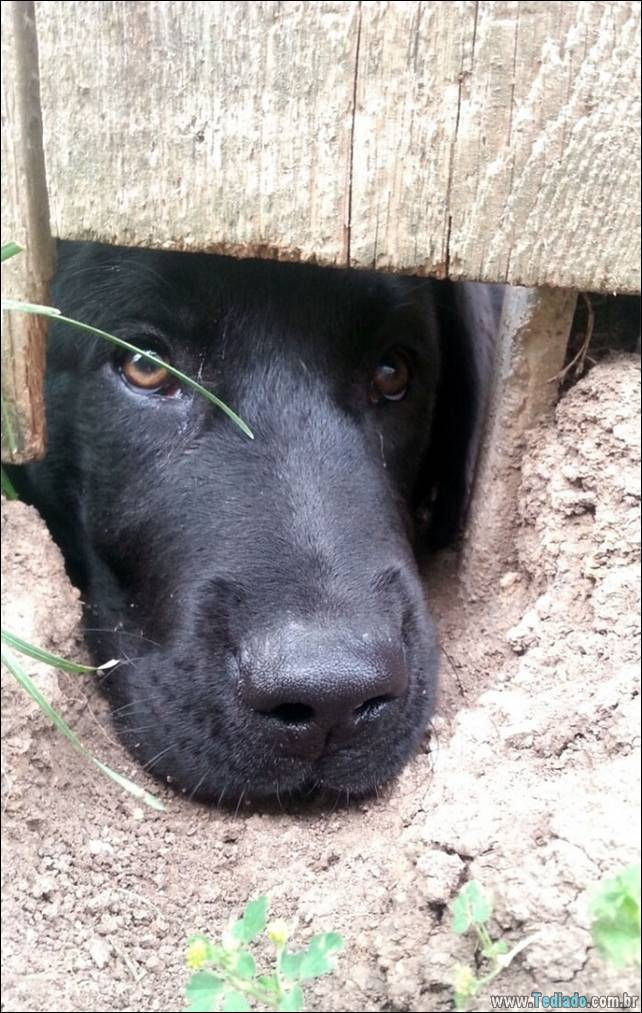 cachorros-desesperado-dizer-oi-28