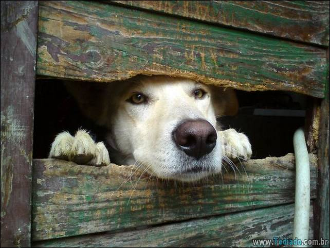 cachorros-desesperado-dizer-oi-30