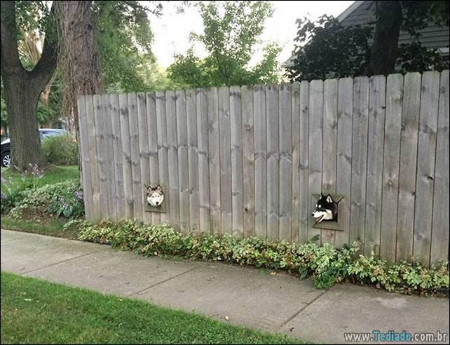 cachorros-e-suas-ideias-malucas-10