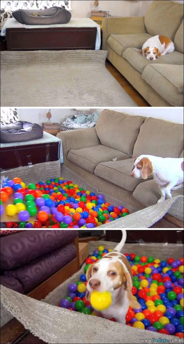cachorros-e-suas-ideias-malucas-15