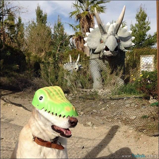 cachorros-e-suas-ideias-malucas-19