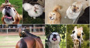 animais-hilarios