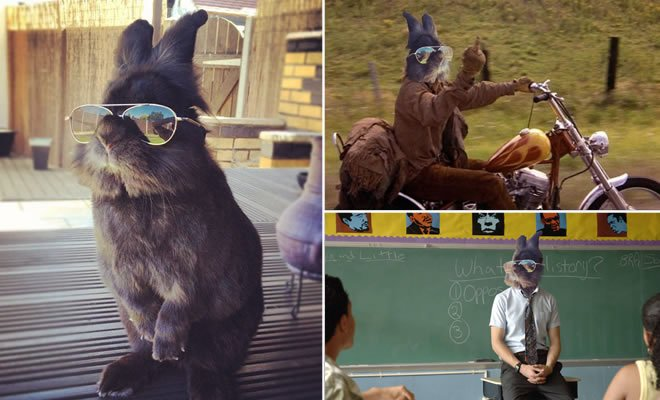 Alguém pôs um óculos de sol em um coelho e começou épica batalha no photoshop (22 fotos) 1