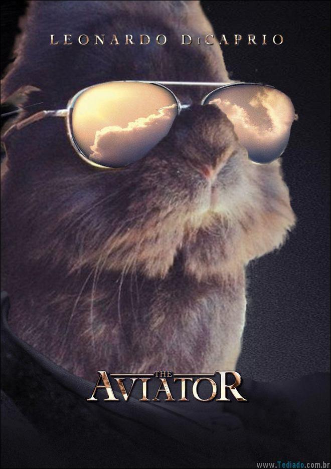 coelho-oculos-de-sol-02