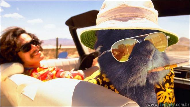coelho-oculos-de-sol-10