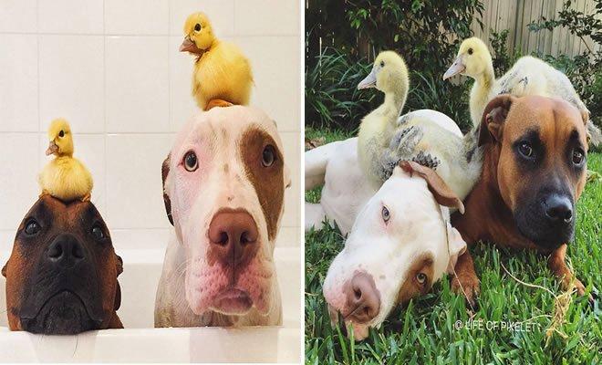 25 Antes e depois de animais que cresceu juntos 2