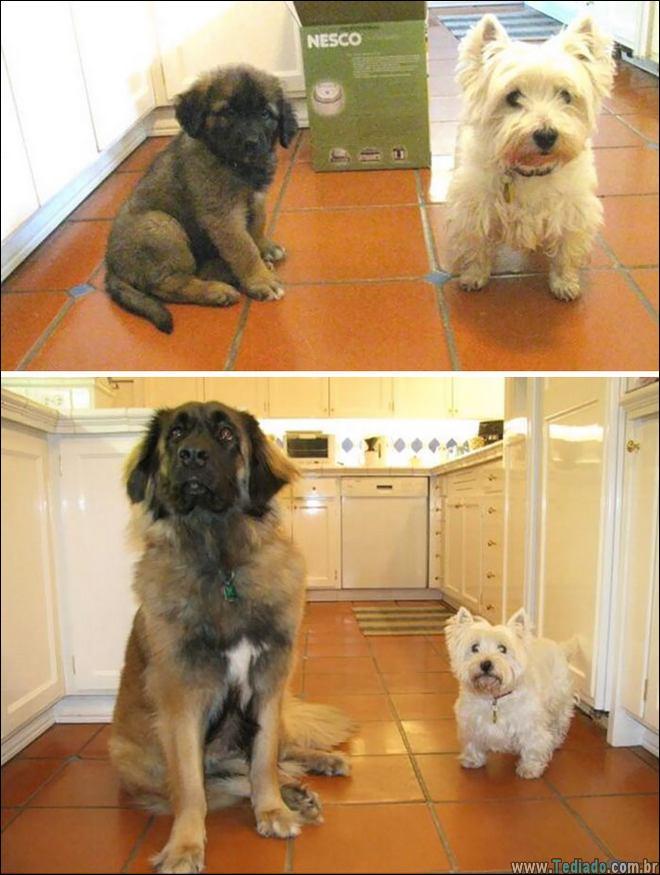 25 Antes e depois de animais que cresceu juntos 7