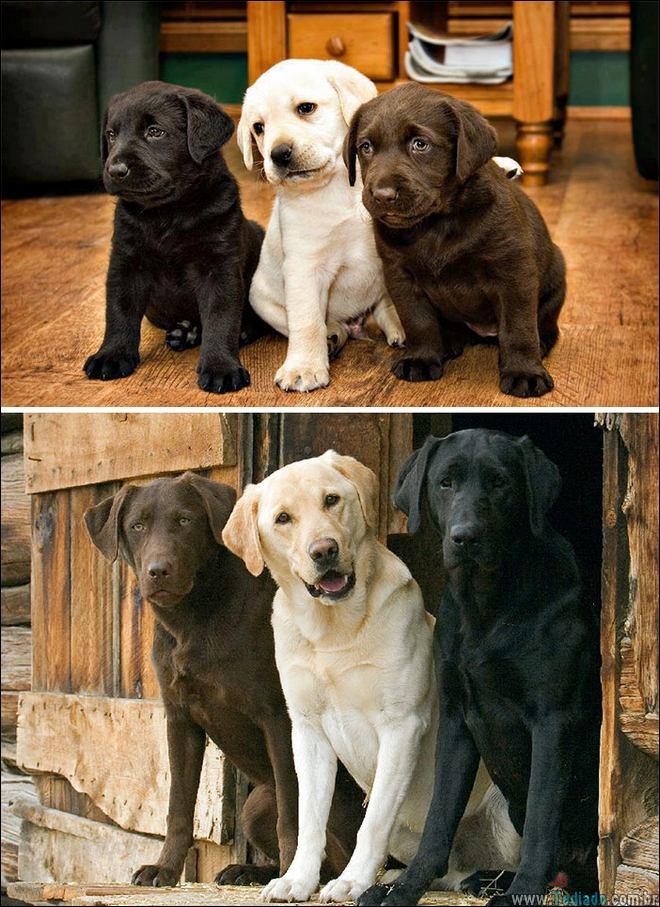 25 Antes e depois de animais que cresceu juntos 8