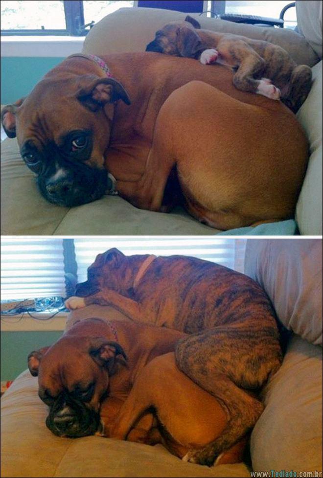 25 Antes e depois de animais que cresceu juntos 9